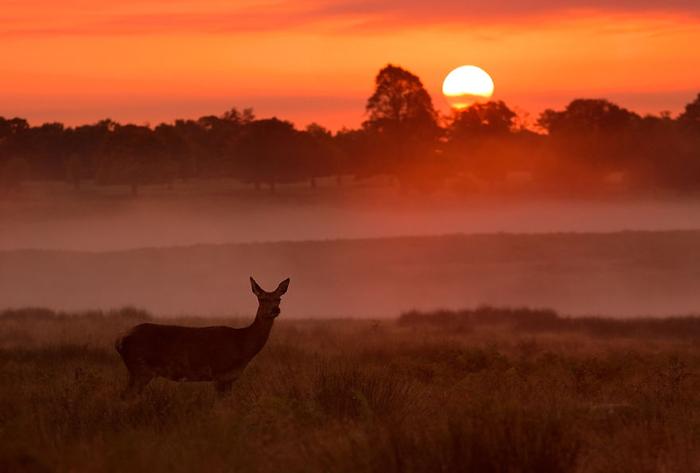 Ричмонд парк на закате дня. Фото: Sam Coppard.