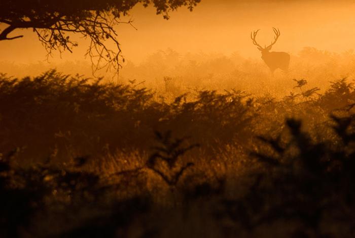 Золотистый свет. Фото: Sam Coppard.