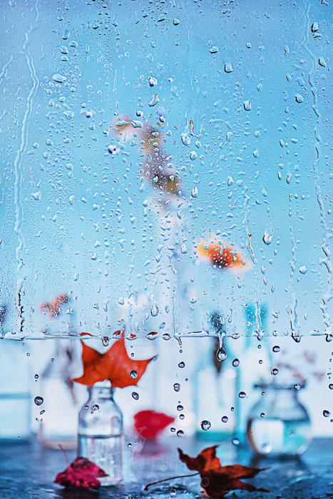 Дождливый день: начало осени. Фото: Дина Беленко.