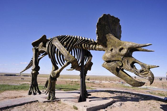 В парке можно найти скелеты динозавров настоящих размеров.