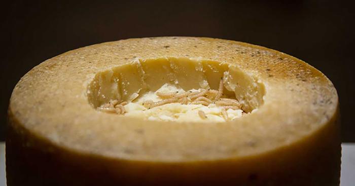 Касу марцу - традиционный сыр из Сардинии, известный содержанием в нём Ð¶Ð¸Ð²Ñ‹Ñ Ð»Ð¸Ñ‡Ð¸Ð½Ð¾Ðº сырной муÑи.
