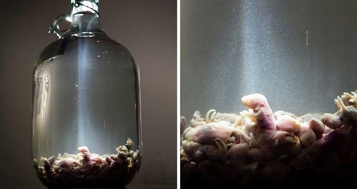 Настойка на зародышах мышей из Китая.