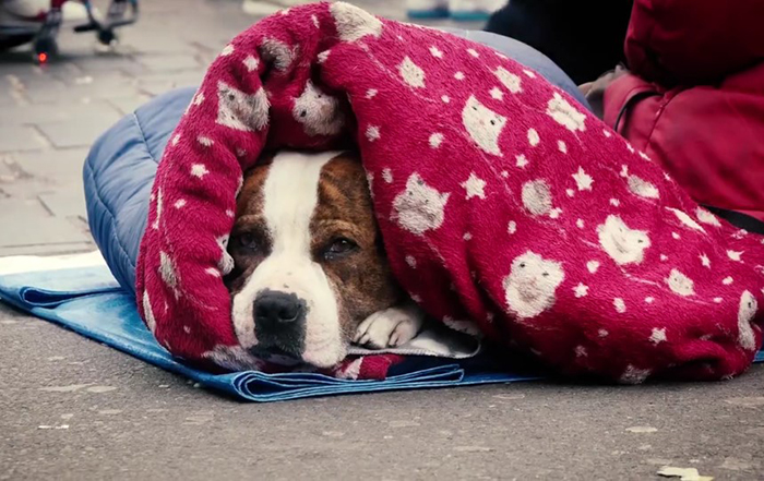 В лютые морозы животные также страдают, как и люди.