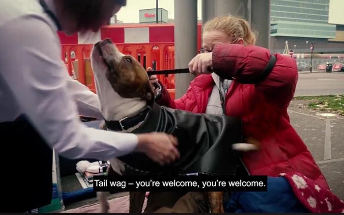 Собаки очень приветливые и отзывчивые.