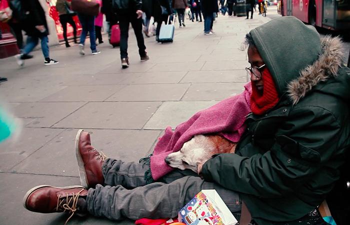 Британцы решили помочь питомцам бездомных людей.