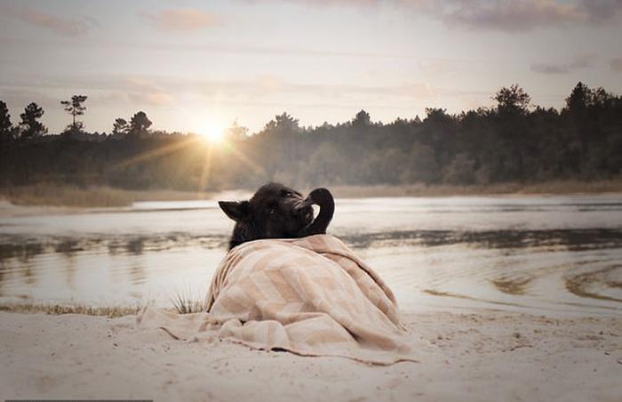 Дружба животных началась в прошлом году, когда Лемони впервые появилась на ферме.