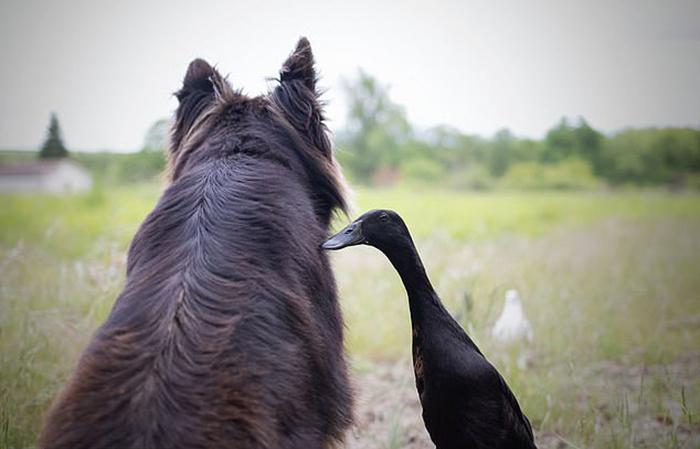 Несмотря на разницу в размерах, животные чувствуют себя комфортно в обществе друг друга.
