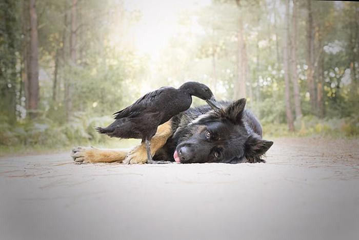 Будучи еще утенком, Лемони постоянно ходила хвостиком за собакой.