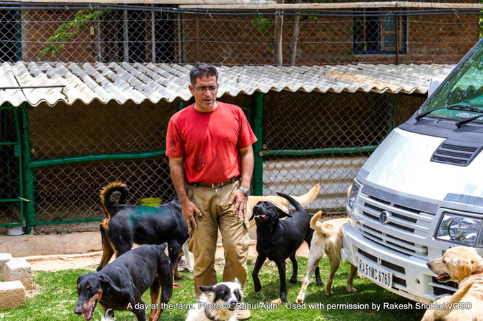 День в центре для собак. Фото: Rakesh Shukla.