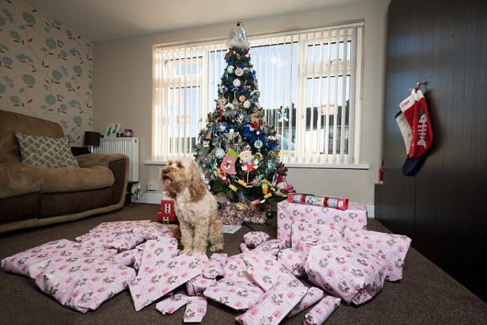 Лола в окружении рождественских подарков.