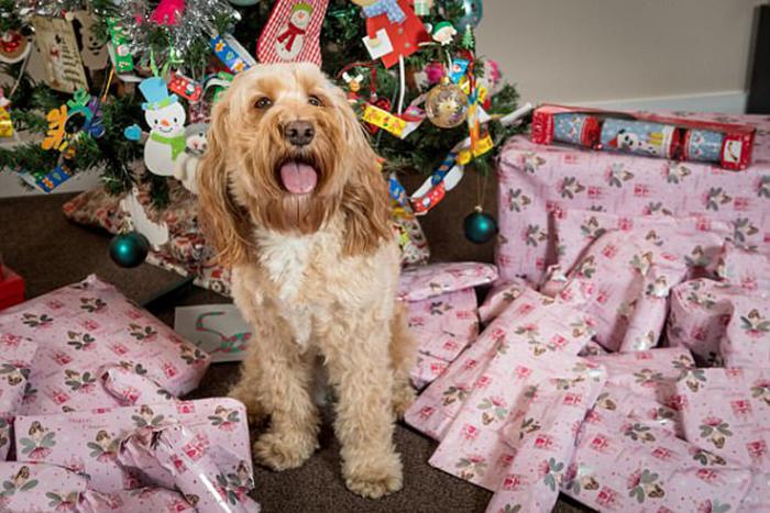 На рождество Лола получит значительно больше подарков, чем шестилетний Генри.