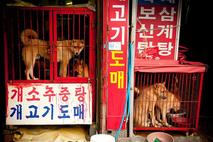 Собачий рынок в Северной Корее. Фото: Ben Weller Photography.