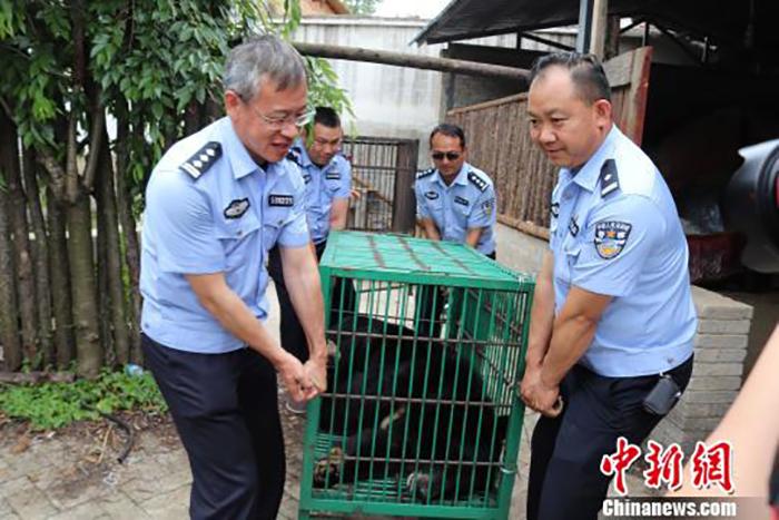 Работники организации по защите диких животных увезли мишку в безопасное место.