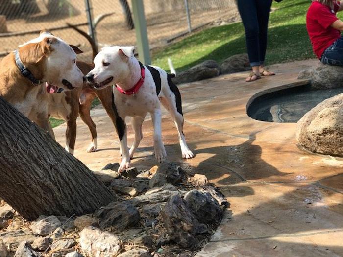 На вечеринке собрались собаки из двух приютов.