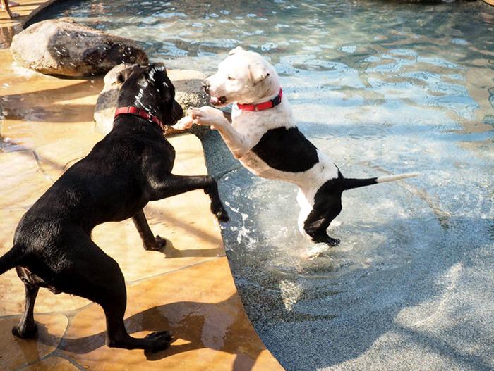 Хозяева приюта полагают, что счастливых собак чаще забирают в новые семьи.