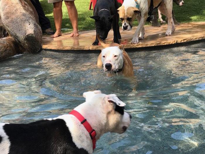 Счастливая собака быстрее находит новый дом и новых хозяев.