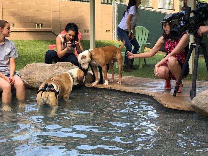Вечеринка у бездомных собак из приюта.