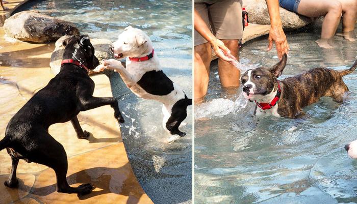 Собаки на вечеринке у бассейна.