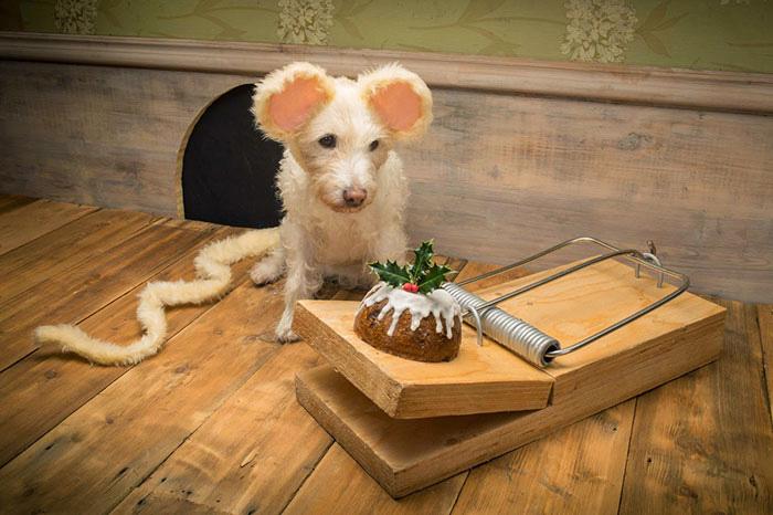 Мышка, 2014 год.