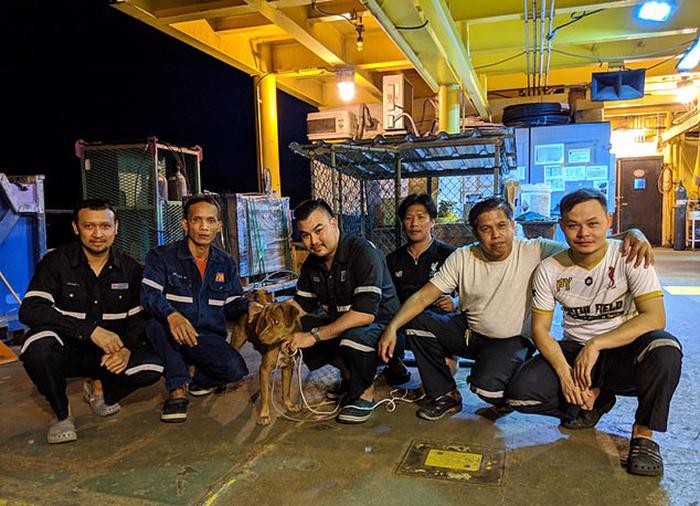 Команда нефтяной платформы со спасенной собакой.