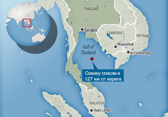 Собаку нашли в более 200 км от берега Тайланда.