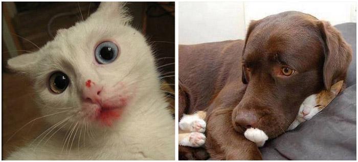 Коты и собаки, которые совершенно не умеют врать.