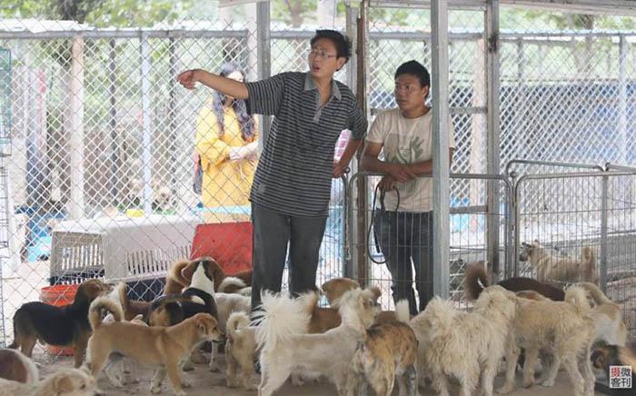 В приюте Чжоу всегда много животных.