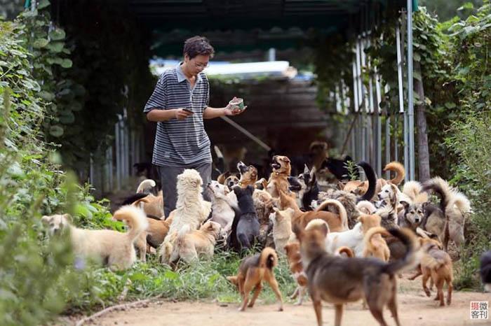 Чжоу старается выполнять все работы в приюте самостоятельно, чтобы сэкономить средства.