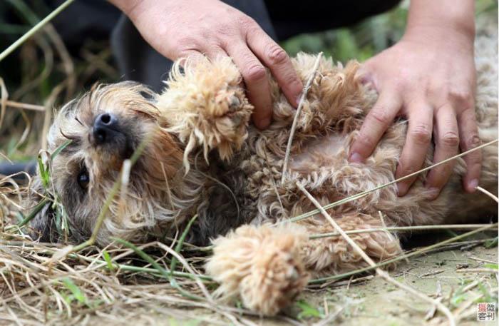 За время работы приюта, Чжоу смог помочь более 700 собакам.