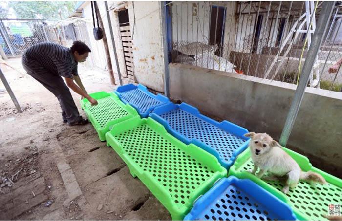 В приюте всегда есть что делать, особенно, когда все клетки с животными заполнены.