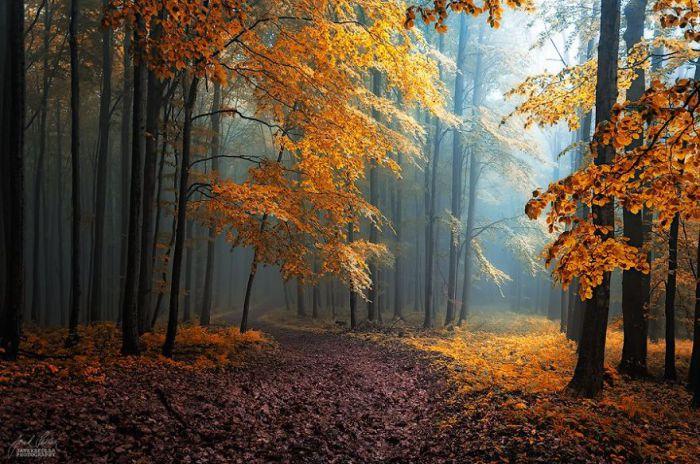 Спрятанное под листьями. Автор фото: Janek Sedlar.