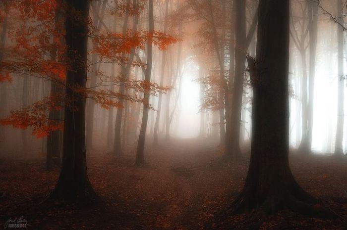 Молчаливый лес. Автор фото: Janek Sedlar.