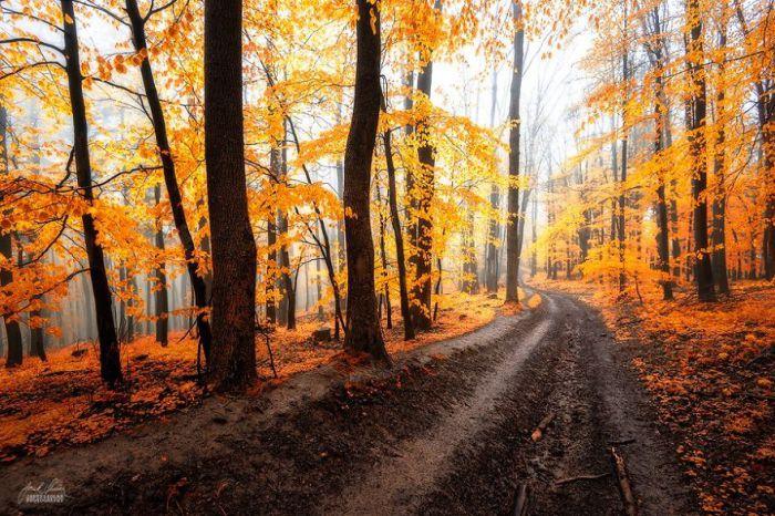 Путь. Автор фото: Janek Sedlar.