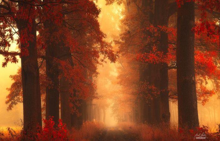 Очарован поэзией осени. Автор фото: Janek Sedlar.