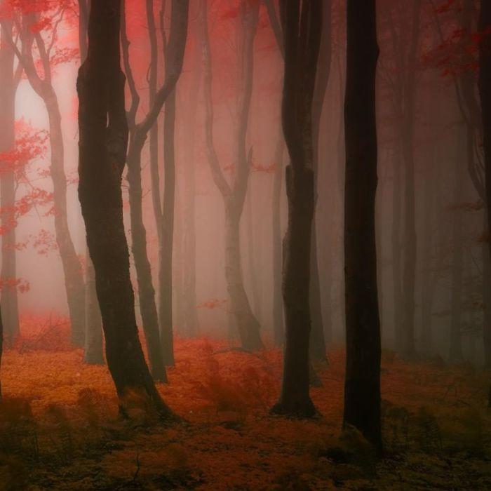 Туман в лесу. Автор фото: Janek Sedlar.