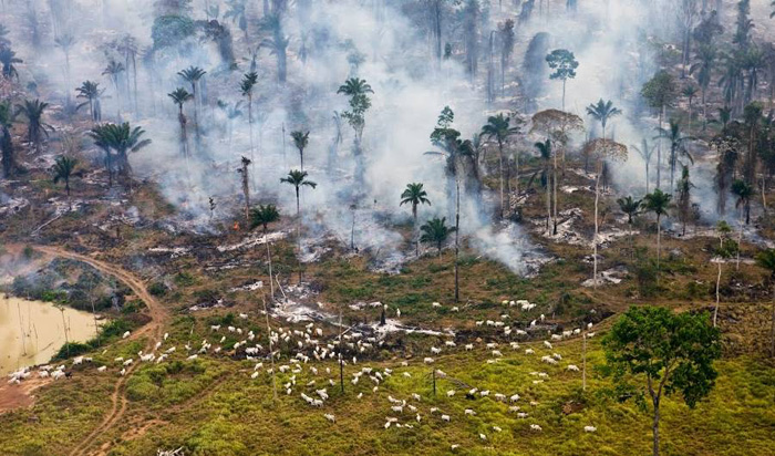 Джунгли Амазонки, Бразилия.