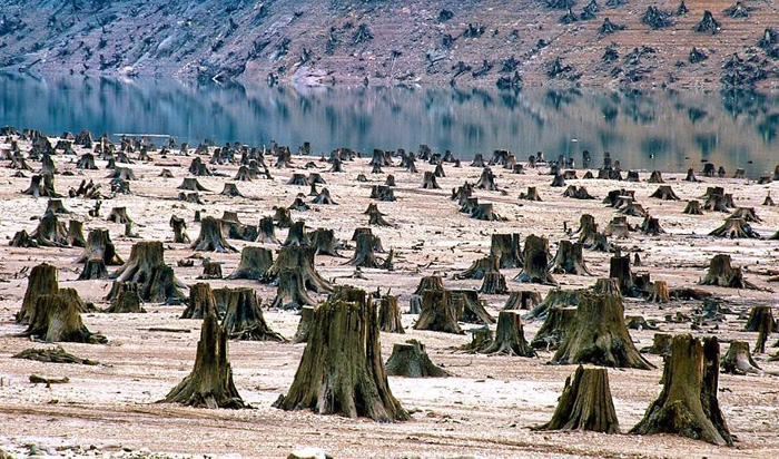 Национальный лес Willamette, Орегон, США.