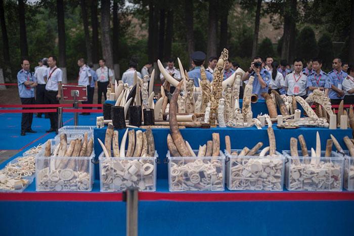 Бивни слонов на продаже в Китае.