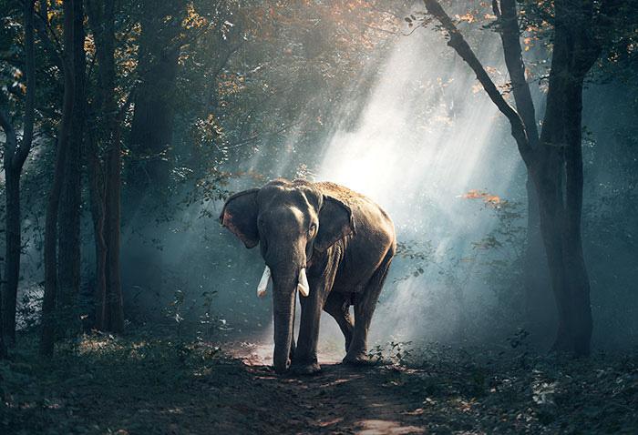 Популяция слонов на сегодня неумолимо сокращается.