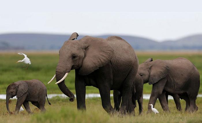 2017 год будет последним в истории китайской индустрии продажи слоновьей кости.
