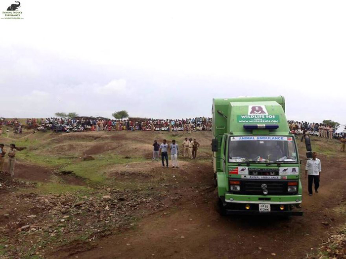 Слон три дня ехал в открытом грузовике, чтобы добраться до нового места жительства в заповеднике.