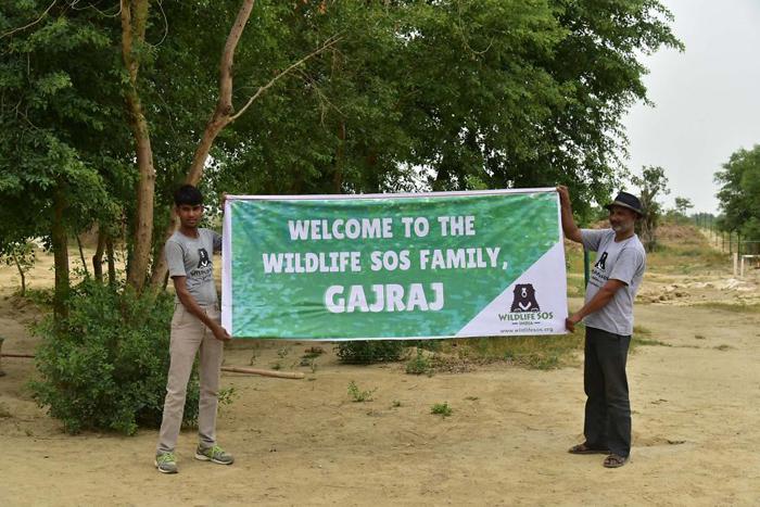 Гаджраджа приветственно встречали местные работники.