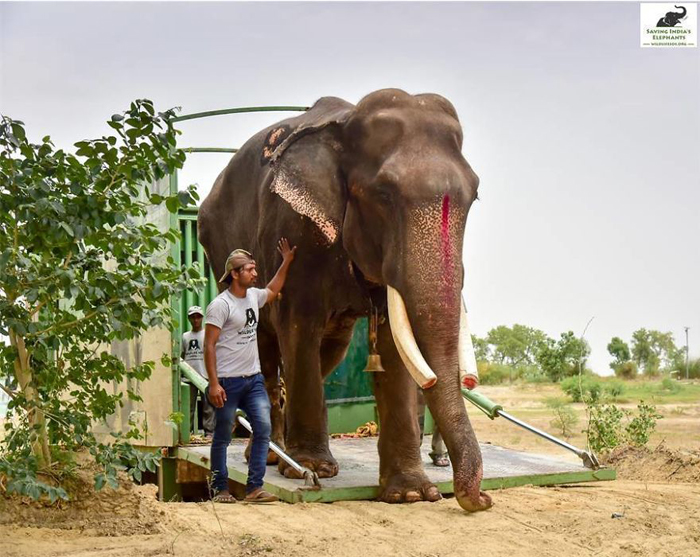 В новом месте жительства слона ожидали забота и уход.