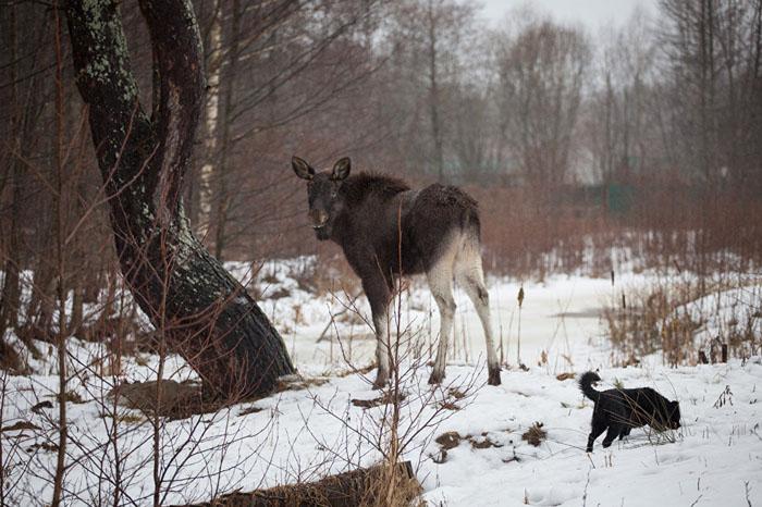 Лучший друг Гриши - собака Топик. Фото: Сергей Лескеть.