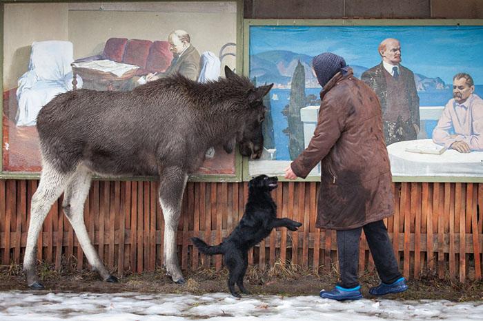 Большой питомец. Фото: Сергей Лескеть.