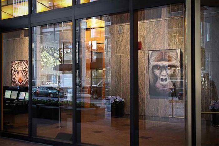 Персональная выставка картин Эйана Хоггинса Джонезиса.
