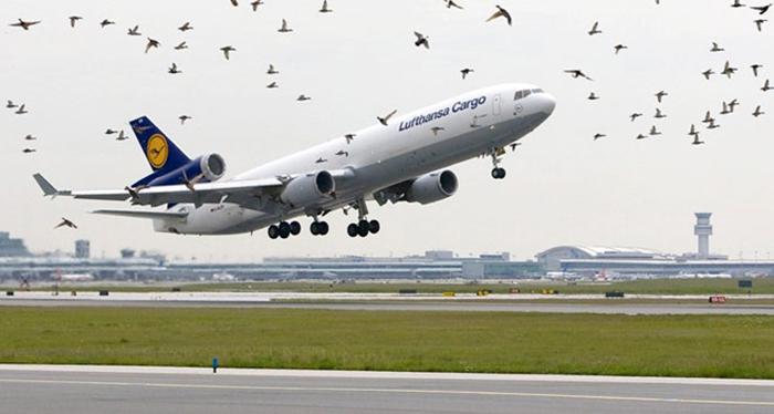 Птицы и авиация.
