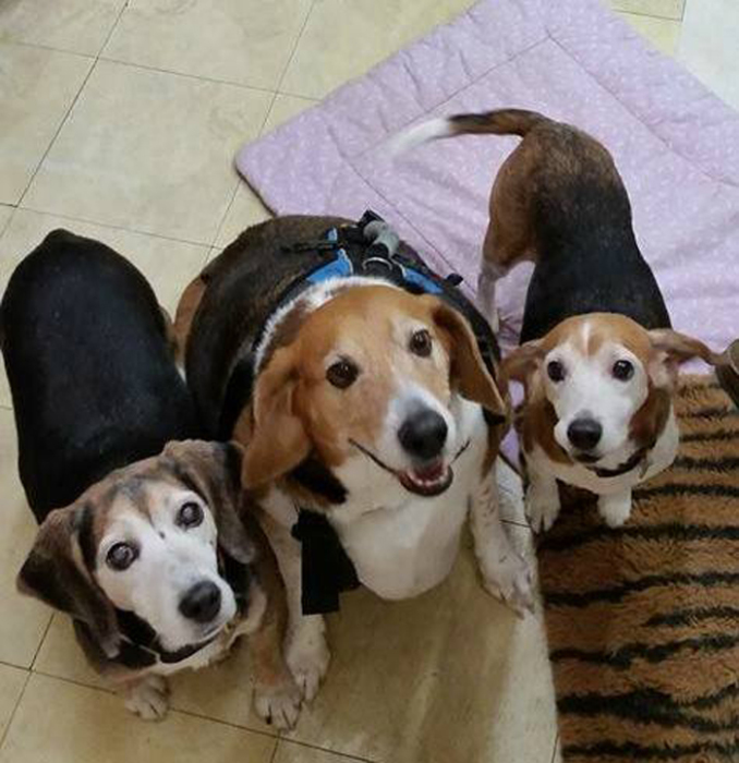 Бигль со своими новым друзьями в приемной семье.