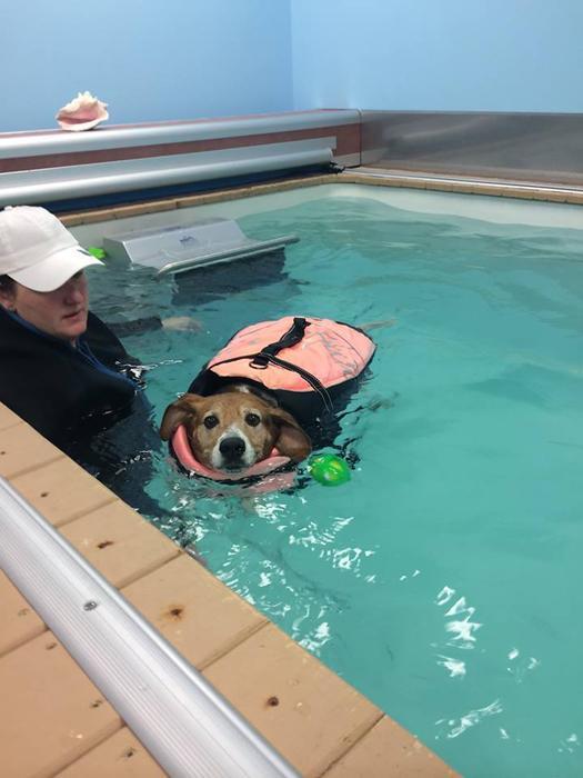 Февраль 2015 г. Кейл Чипс стал посещать специальный бассейн под присмотром тренера.