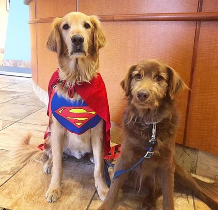 Одним из пунктов списка было прийти в костюме Супермена в ветлечебницу на курс химиотерапии.